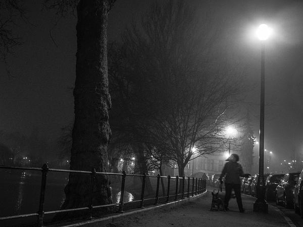 cold winter dog walk