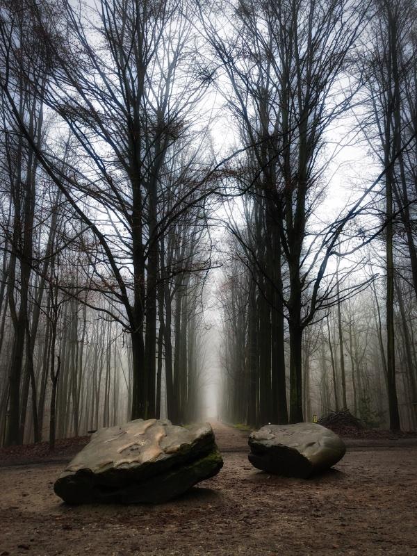 Tervuren forest fog