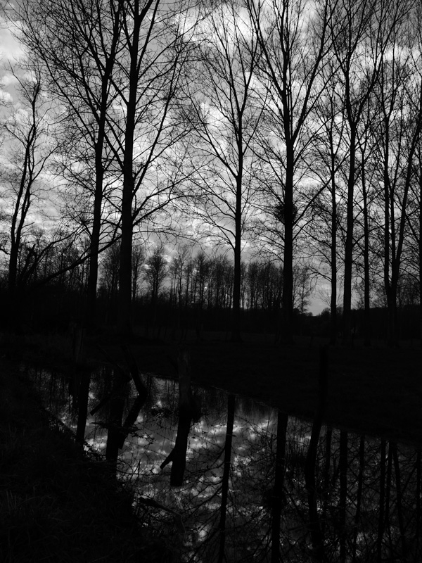 forest refection