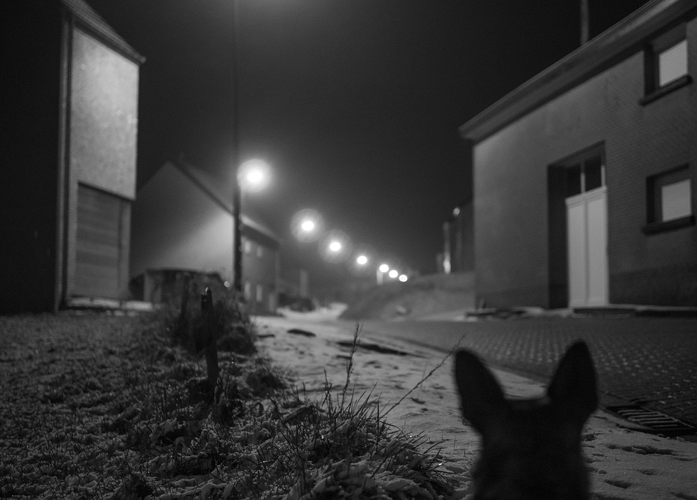 dog in the village