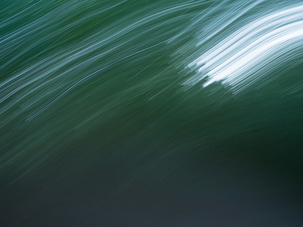 forest motion blur