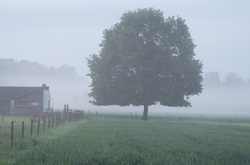 lone tree farm
