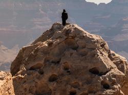 crow grand canyon