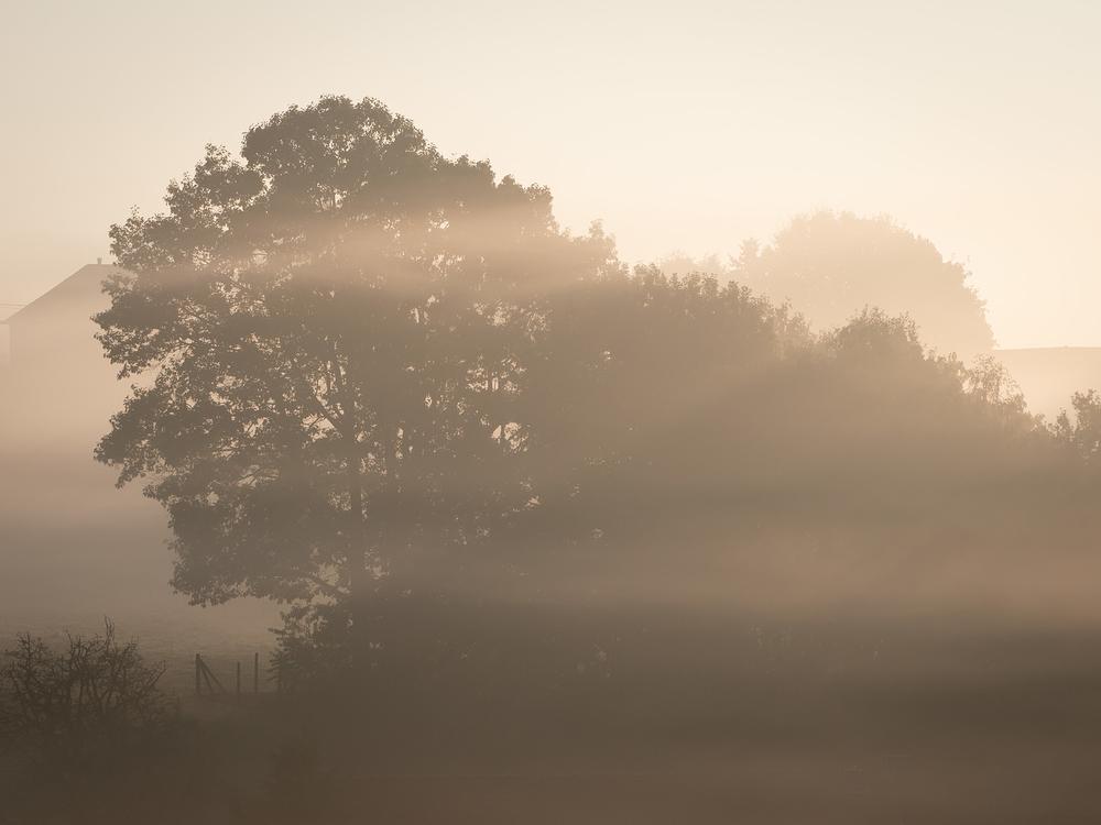 serene foggy morning