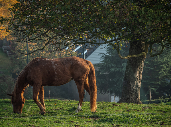 horse in beautiful morning light