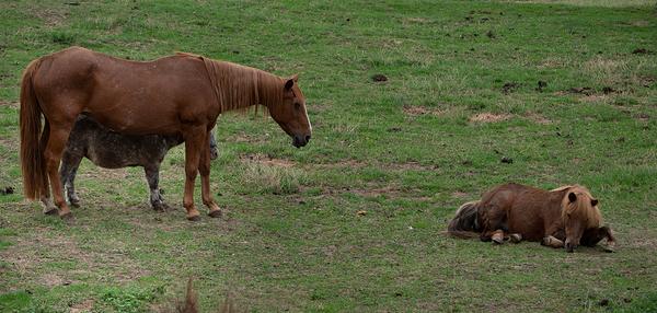 How Many Horses?