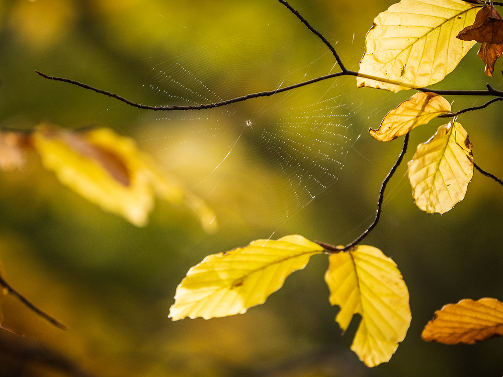 spider web in autumn leaves
