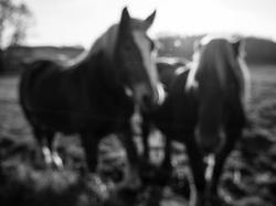dreamy ponies