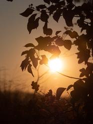 sunset autumn leaves