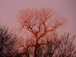 red tree light up