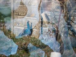 multi-exposure peacock