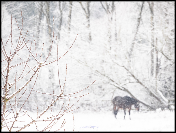 stark winter horse