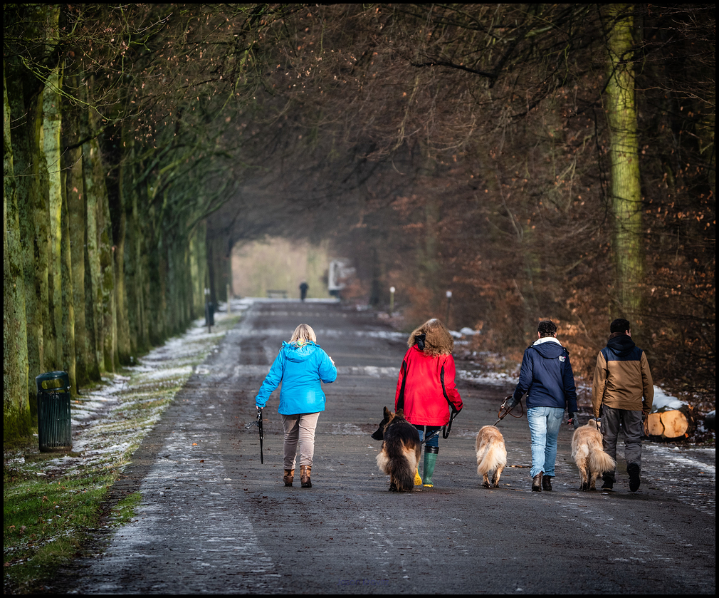 dog walking tervuren