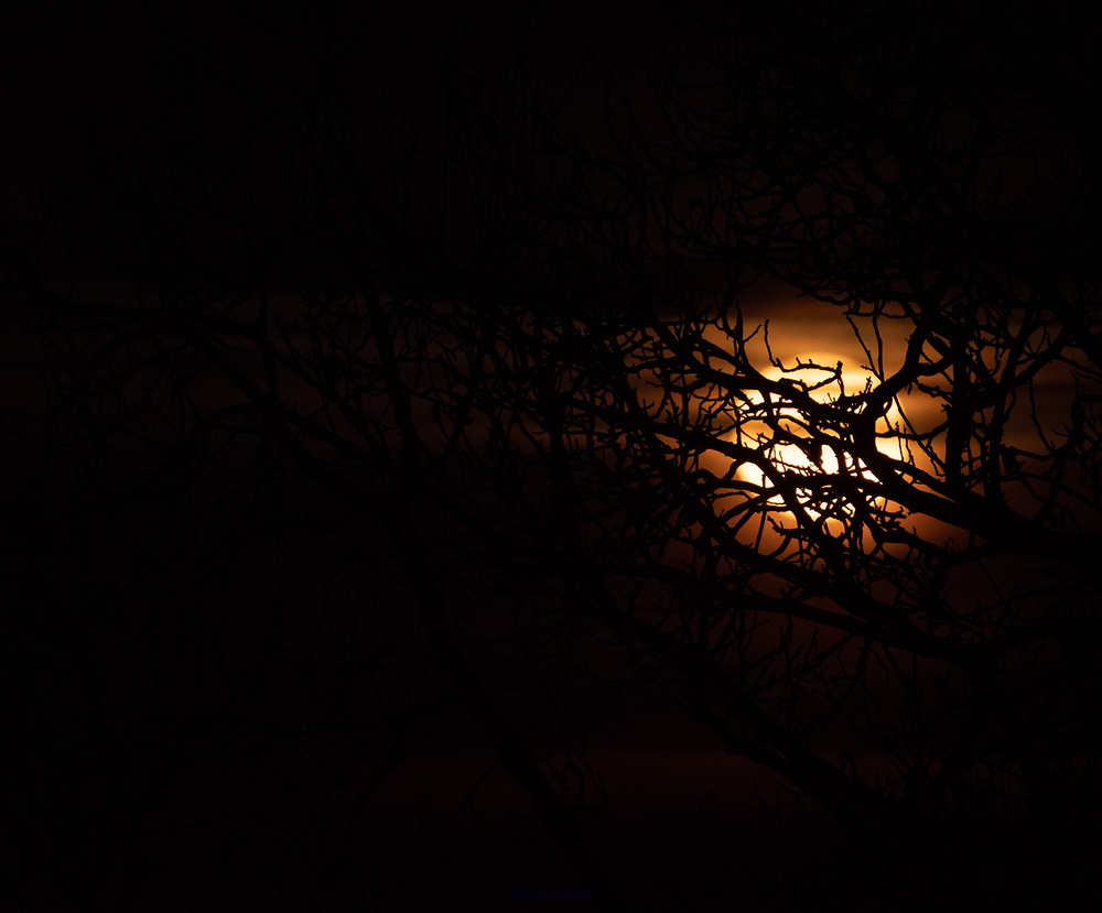 moon behind those dark branches