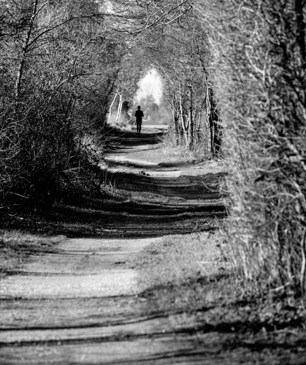 jogging forest tunnel