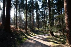 tervuren arboretum path