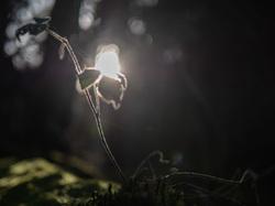 sun through forest
