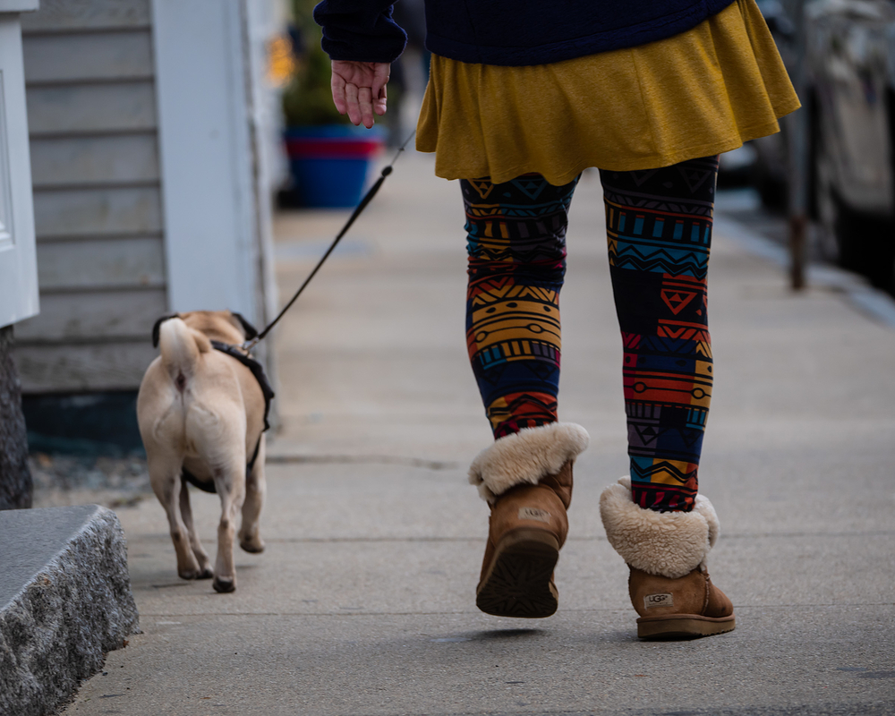 walking the pug