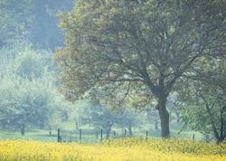 belgian fields