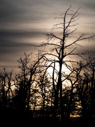 moody sunset branches