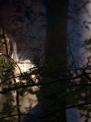multi-exposure forest woman