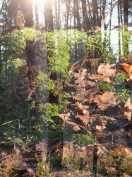 forest leaves multi-exposure