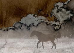 multi-exposure horse