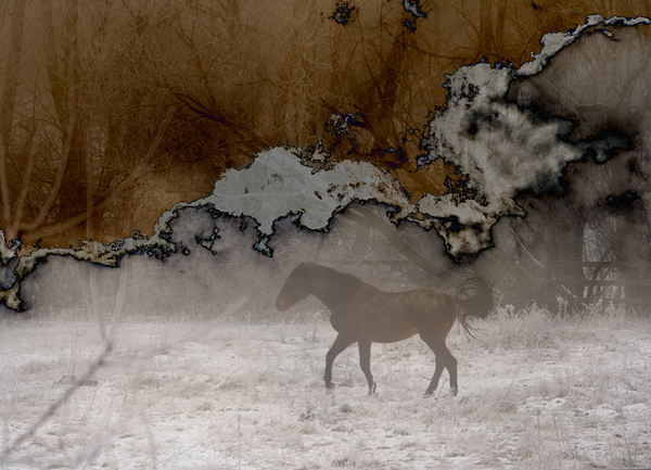 multi-exposure horse