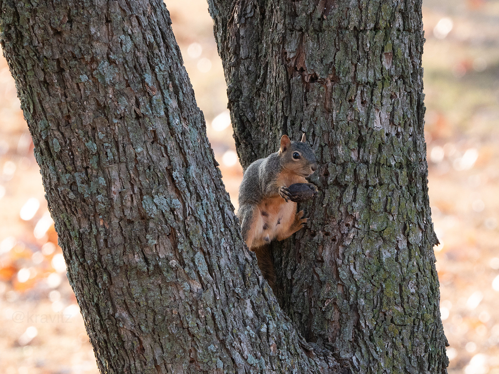 squirrel hanging out in a tree