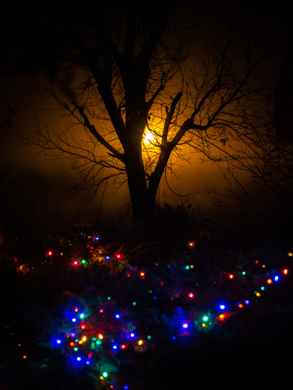 foggy christmas