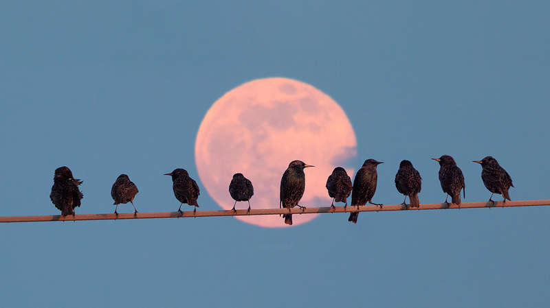 congregation (by the light of the moon)
