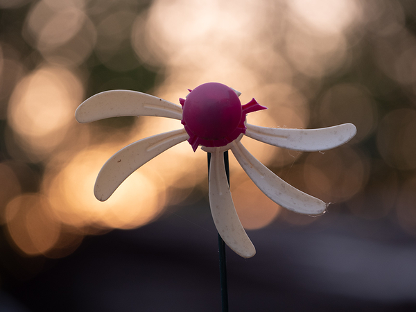 pinwheel bokeh sunset