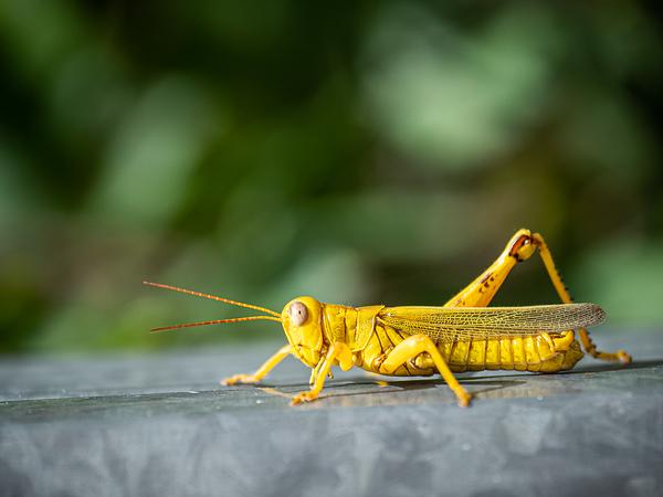 my yellow friend