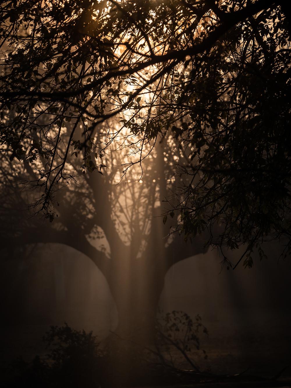 through dark branch