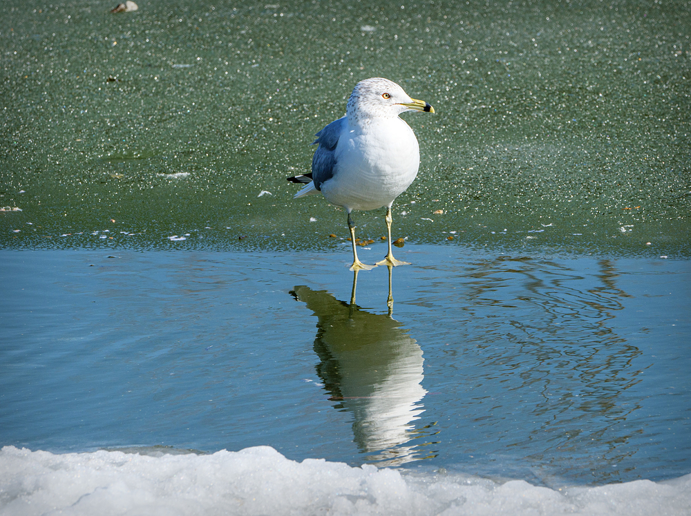 sitting on the dock of the puddle