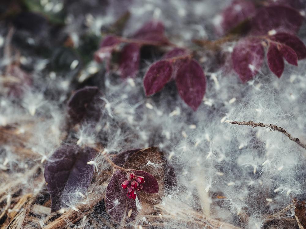 sneezy snow