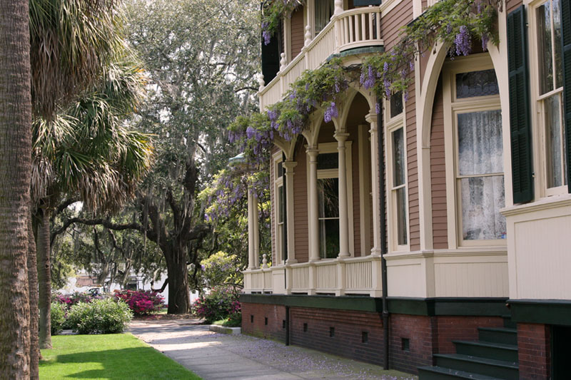 Savannah in the Spring