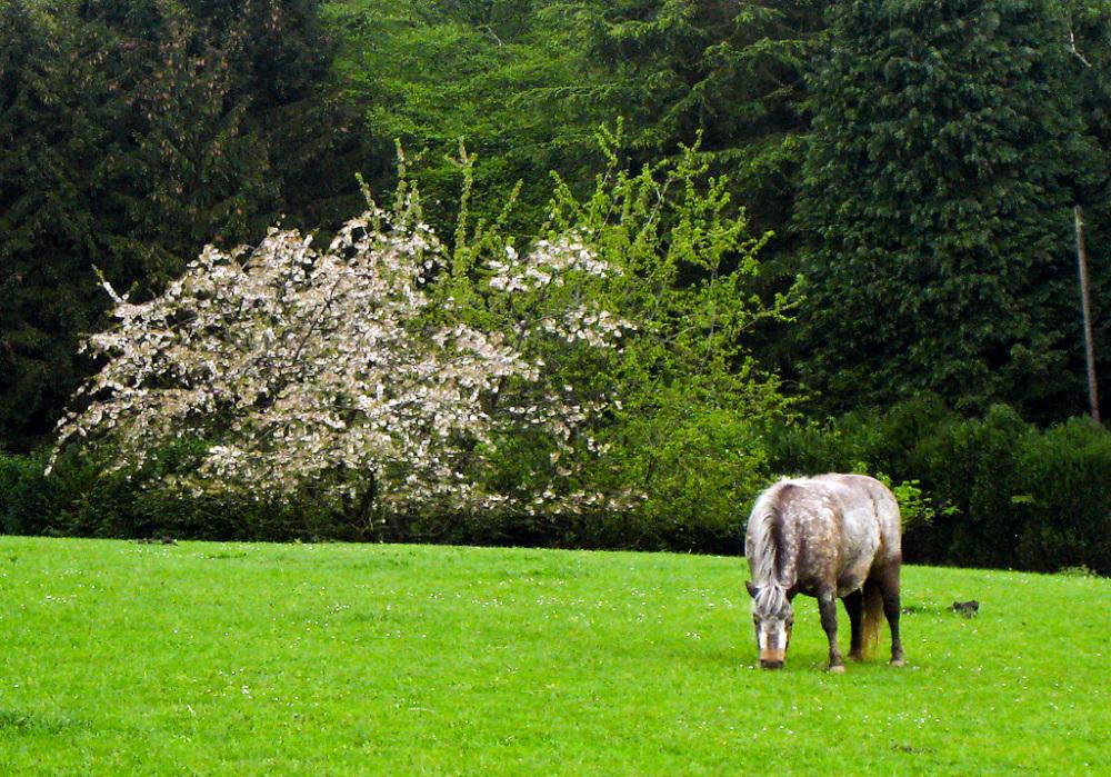 horse in duisberg, belgium