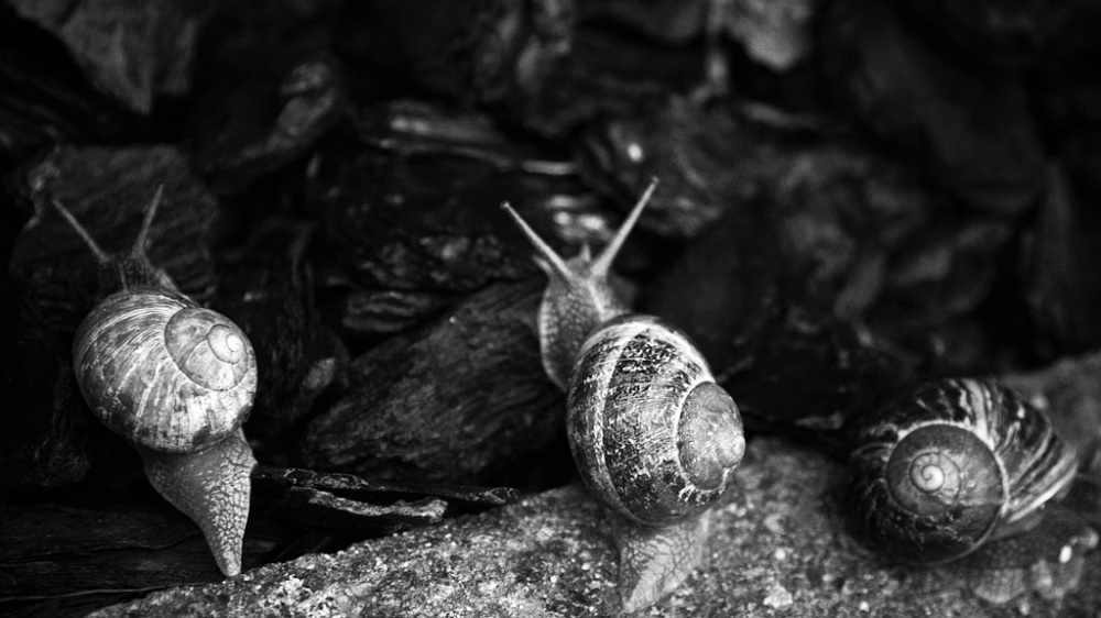 The snail within us all ...