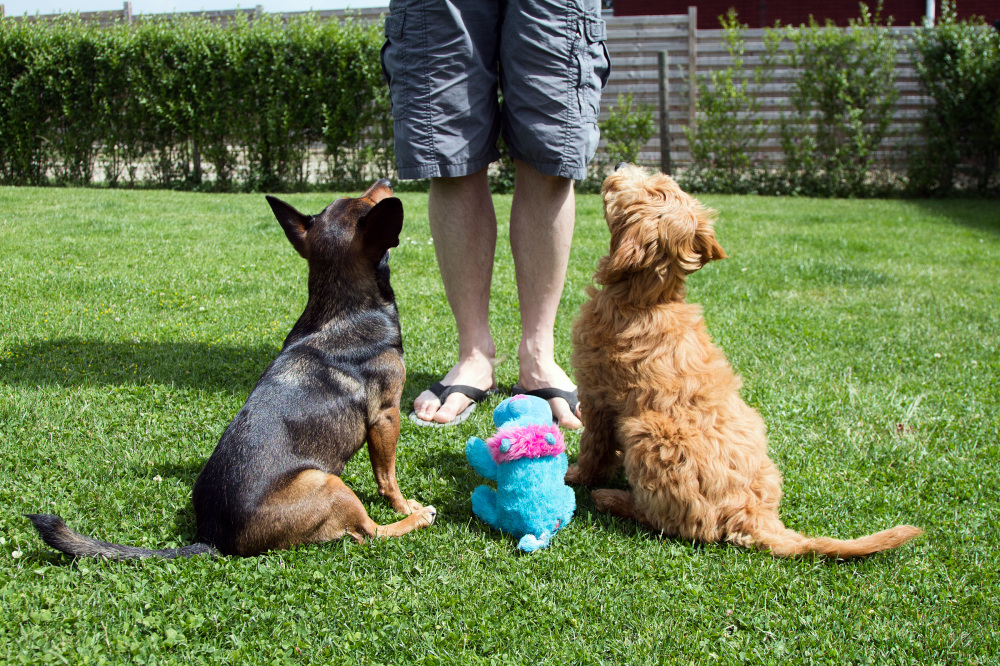 puppies waiting for instructions