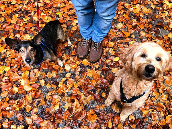 golden leaves, man boots, dogs