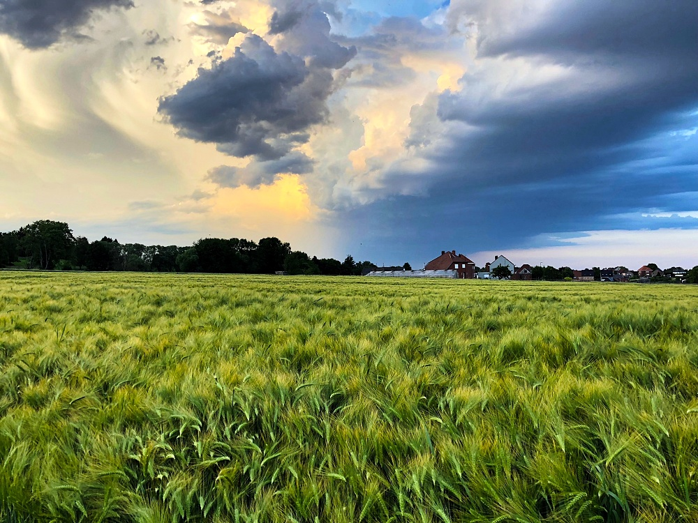 storm, wheat field, clouds