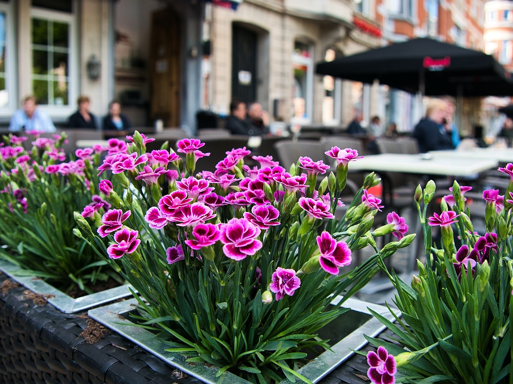 leuven, patio scene, flowers