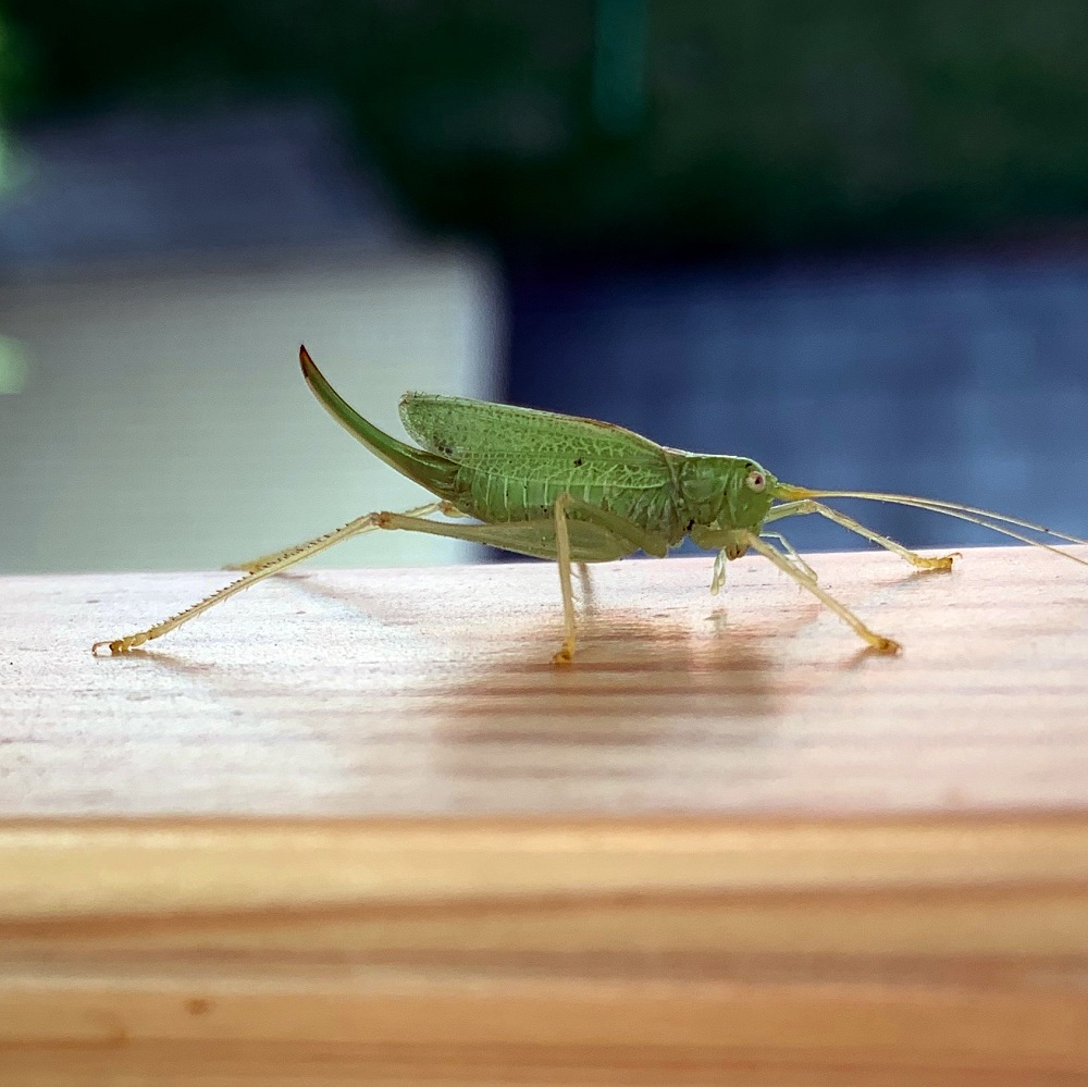 green grasshopper, window sill, new beginnings