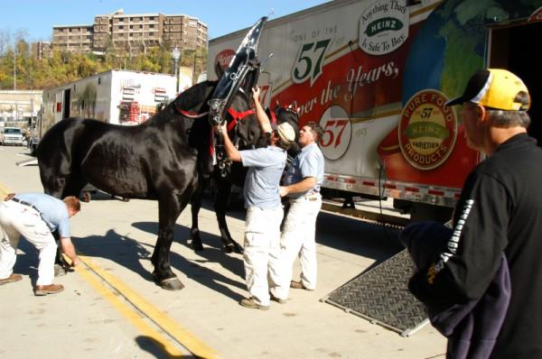 Heinz Horses 2