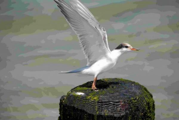 Baby Sea Gull