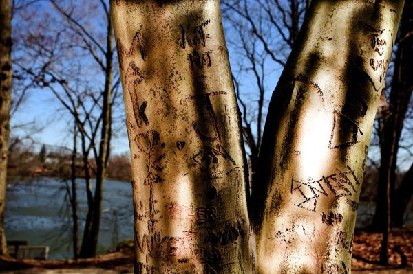 Initialed Trees