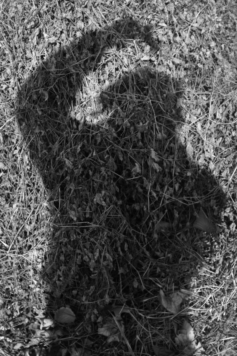 Shadow Portrait #3