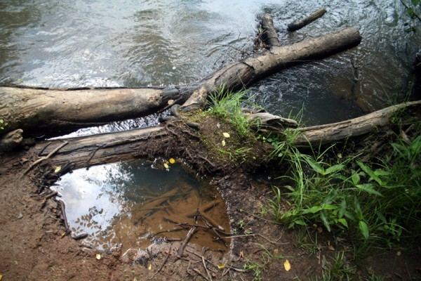 Sweet Water Creek II