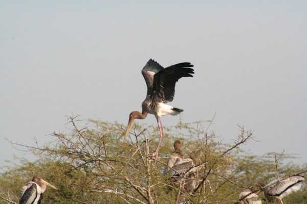 A bird landing !
